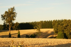Sustainable Agrifood System, Climate Change y Biodiversity